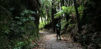 the timber trail